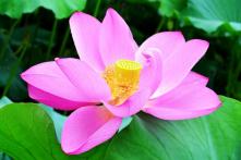 Suy ngẫm: Người lễ tân tốt bụng và cặp vợ chồng già tỷ phú