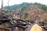 Rừng nguyên sinh còn nguyên vẹn tại Việt Nam chiếm tỷ lệ quá thấp, chỉ 0,25%