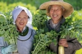Vì sao người Nhật sống lâu hơn người Việt 10 năm?