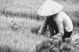 Năm nhuận - Trích Chuyện làng thời Hợp tác xã
