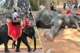 Campuchia sẽ cấm dịch vụ cưỡi voi tại AngKor Wat vào năm 2020