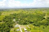 Vườn rừng sinh thái – Phương pháp cải tạo Trái Đất