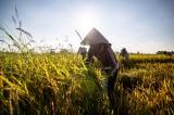 Quý I: Nông nghiệp tăng trưởng âm 1,17%