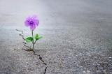 tìm thấy hy vọng, thử thách, Hy vọng