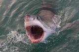 Vợ bầu nhảy xuống biển cứu chồng bị cá mập tấn công