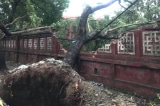 1 người chết, 1 người mất tích, 36 người bị thương trong bão số 5