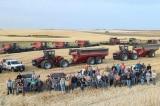 60 người hàng xóm giúp người nông dân bị đau tim thu hoạch nông sản