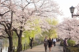 8 điều thú vị bạn sẽ phát hiện ra khi đến Nhật Bản
